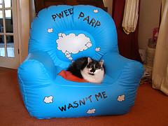 Cat_farts